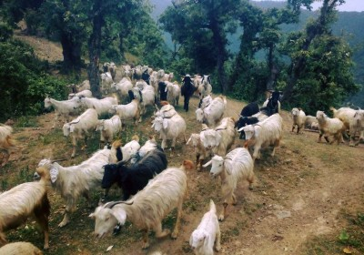 Green People – Agro Tourism in Uttarakhand