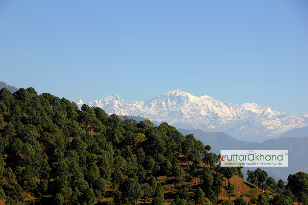 Forests and Himalayan Ranges