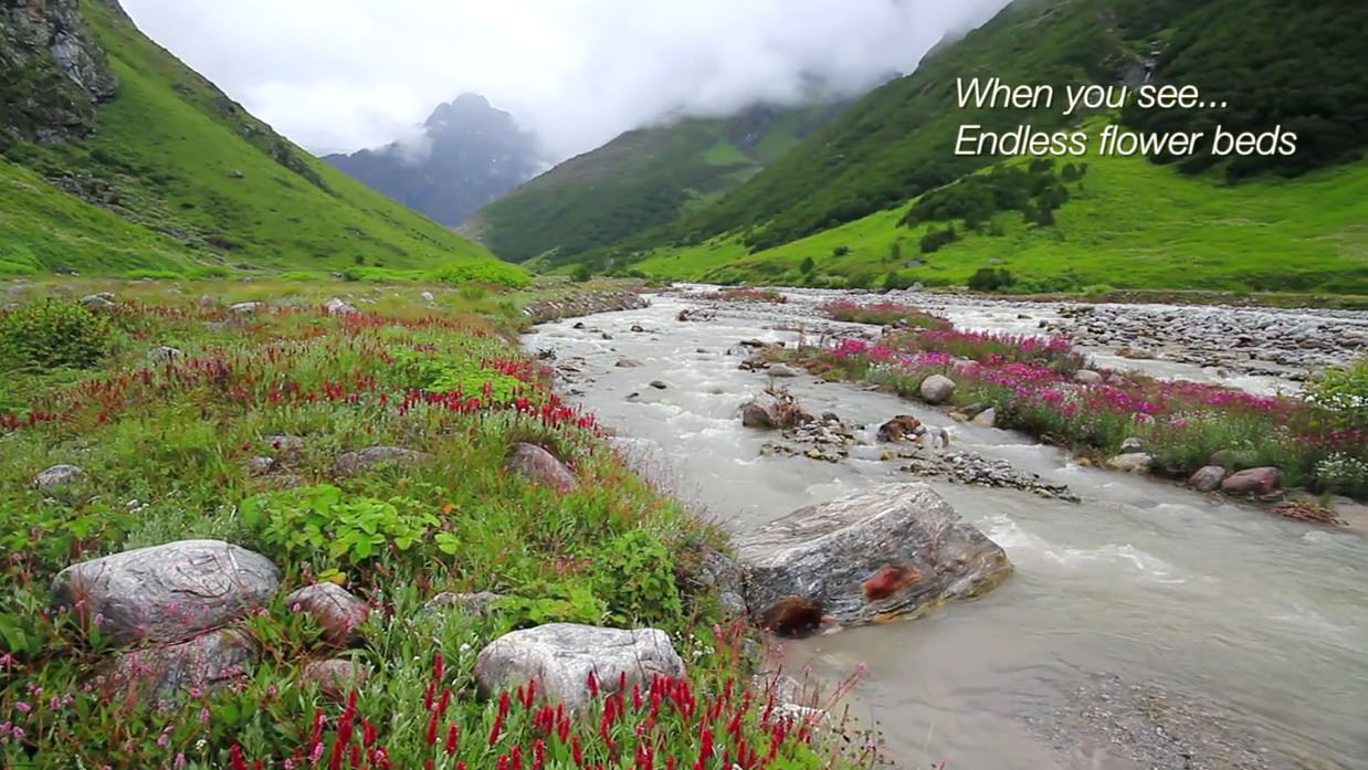 Endless flowers, meadows, forest in Valley of flowers