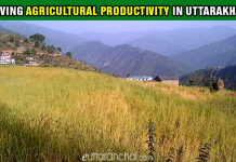 Agricultural-productivity in Uttarakhand