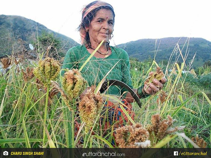Reviving agricultural productivity in Uttarakhand