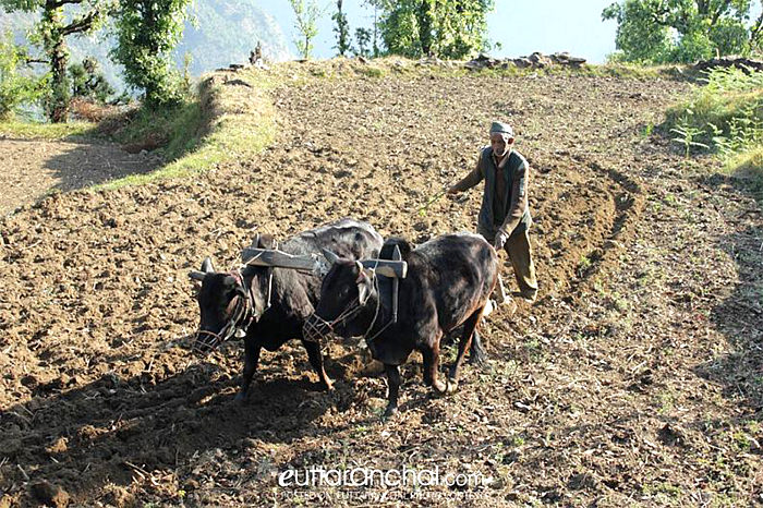 Traditional farming methods