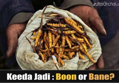 Keeda Jadi: Boon or Bane?