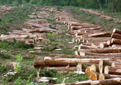 Uttarakhand lose 268sqkm forest area since 2013