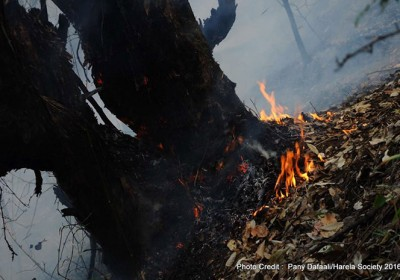 Harela Society – A Group Saving the Forests of Uttarakhand from Burning into Fumes