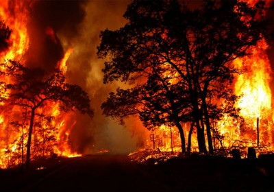 Possible Reasons Behind the Forest Fire of Uttarakhand, What's Your Take?
