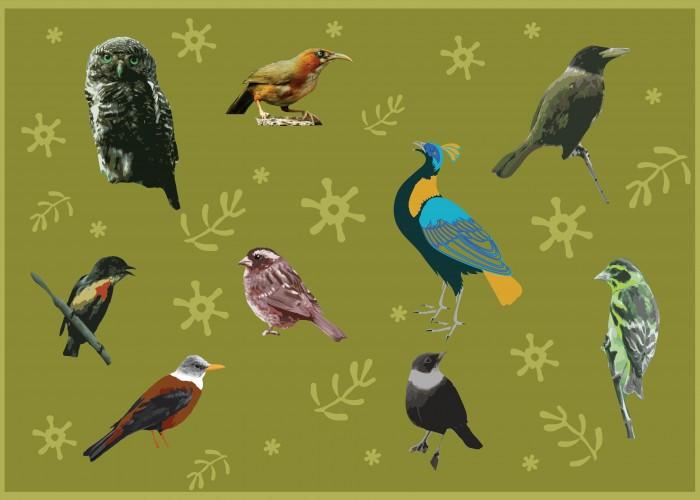 Chopta: A home to magnificent Himalayan birds.