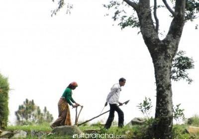 Organic Farming In Uttarakhand Himalayas: Explained
